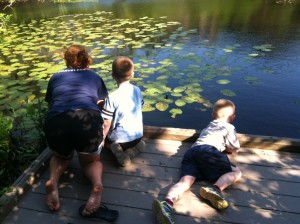 Looking for painted turtles at Wellfleet Audubon