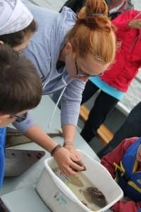 Educating families about sea life on Marine Life Cruises