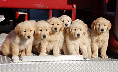 Puppy Love, David Clow