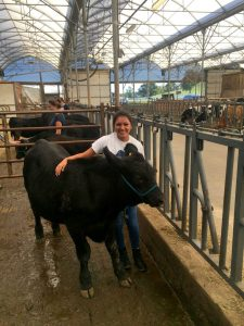 Kelly and a cow