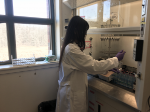 Working on the isolation of fatty acids from Arctic Greenland Killer Whale samples.
